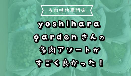 多肉植物専門店yoshihara gardenさんの多肉アソートがすごく良かった!